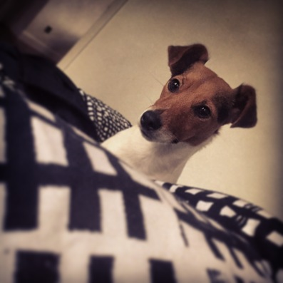 Jack Russell Charlie what?