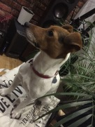 Jack Russell Charlie