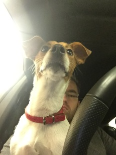 Jack Russell eurotunnel traffic