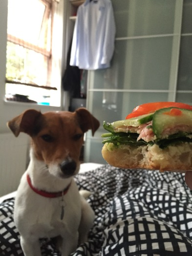 Jack Russell share this sandwich