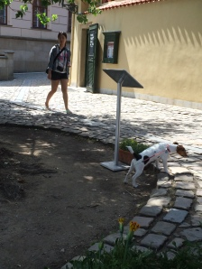 Prague Jack Russell Charlie