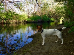 Charlie by the river Wandle