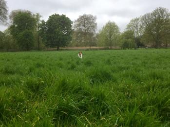 High grass fun
