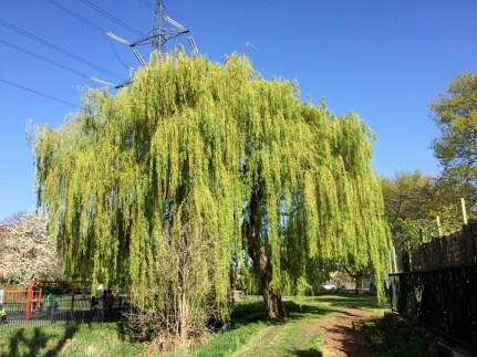Wandle Park Spring