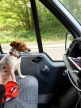Driving Home with Jack Russell