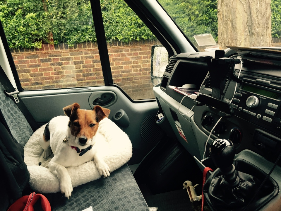 Jack Russell Charlie driving in London