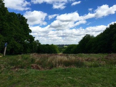 Richmond Park View