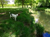 Richmond Park River Jack Russell