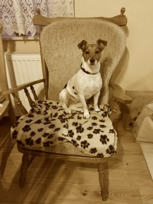 This is my chair, only I'm aloud to sit on it
